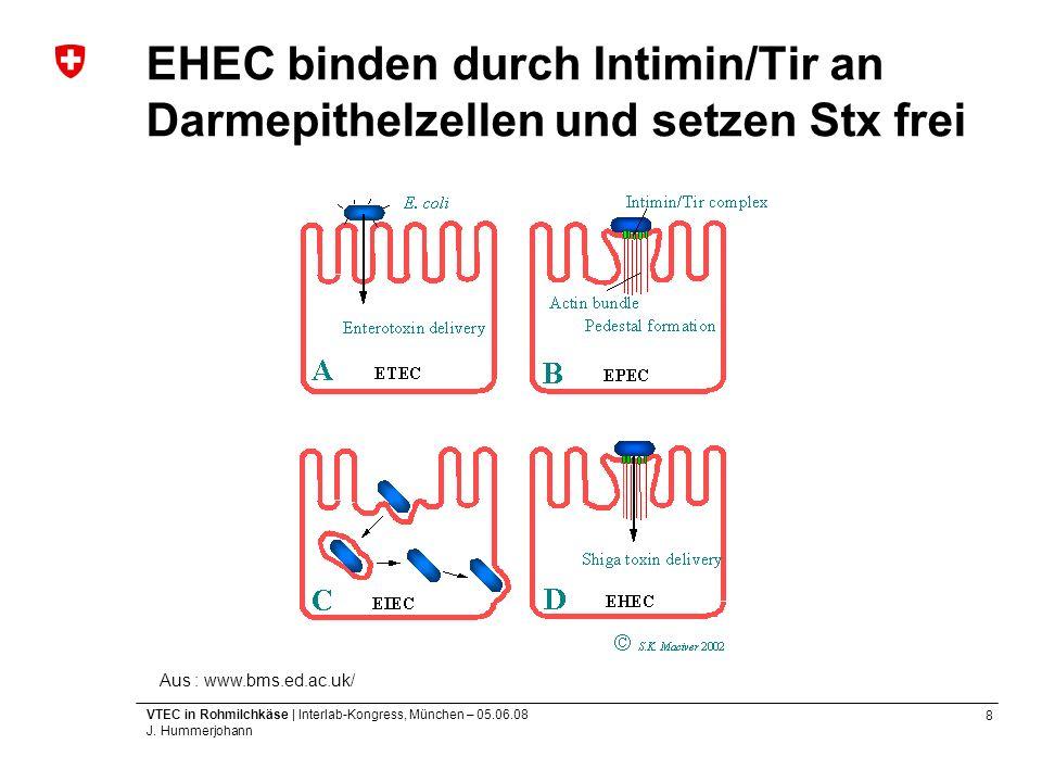 8 VTEC in Rohmilchkäse | Interlab-Kongress, München – 05.06.08 J. Hummerjohann EHEC binden durch Intimin/Tir an Darmepithelzellen und setzen Stx frei