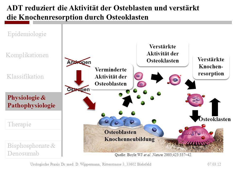Androgene sind ein Schlüsselmediator für die Knochenneubildung 07.03.12Urologische Praxis Dr. med. D. Wippermann, Ritterstrasse 3, 33602 Bielefeld Ost