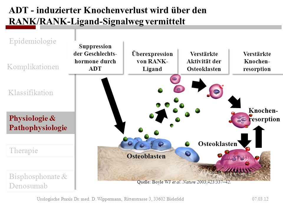 ADT reduziert die Aktivität der Osteblasten und verstärkt die Knochenresorption durch Osteoklasten 07.03.12Urologische Praxis Dr. med. D. Wippermann,
