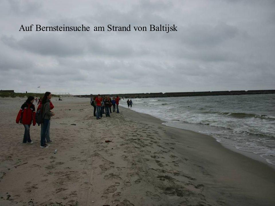Auf Bernsteinsuche am Strand von Baltijsk