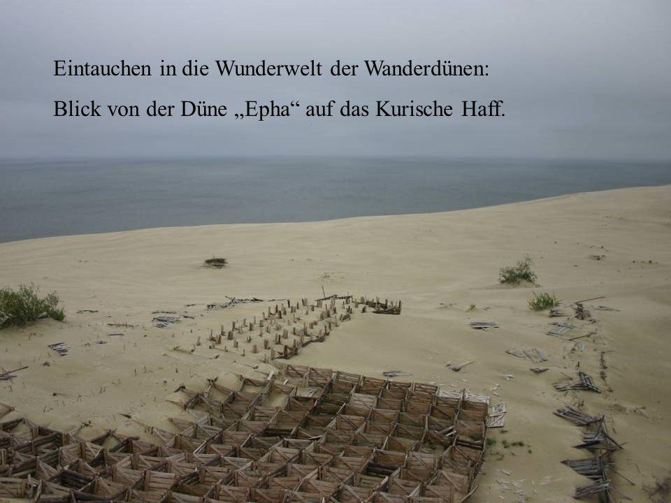 Eintauchen in die Wunderwelt der Wanderdünen: Blick von der Düne Epha auf das Kurische Haff.