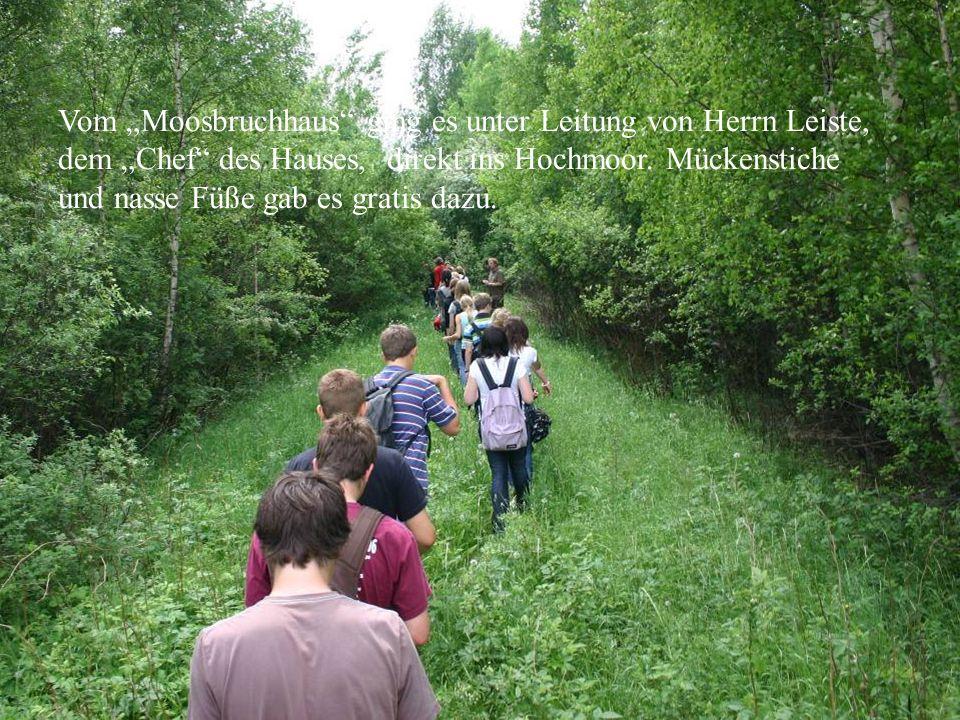 Auf dem Weg ins Moor Vom Moosbruchhaus ging es unter Leitung von Herrn Leiste, dem Chef des Hauses, direkt ins Hochmoor. Mückenstiche und nasse Füße g