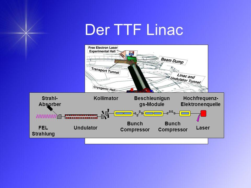 FEL Strahlung Strahl- Absorber Hochfrequenz- Elektronenquelle Laser Bunch Compressor Beschleunigun gs-Module Kollimator Undulator