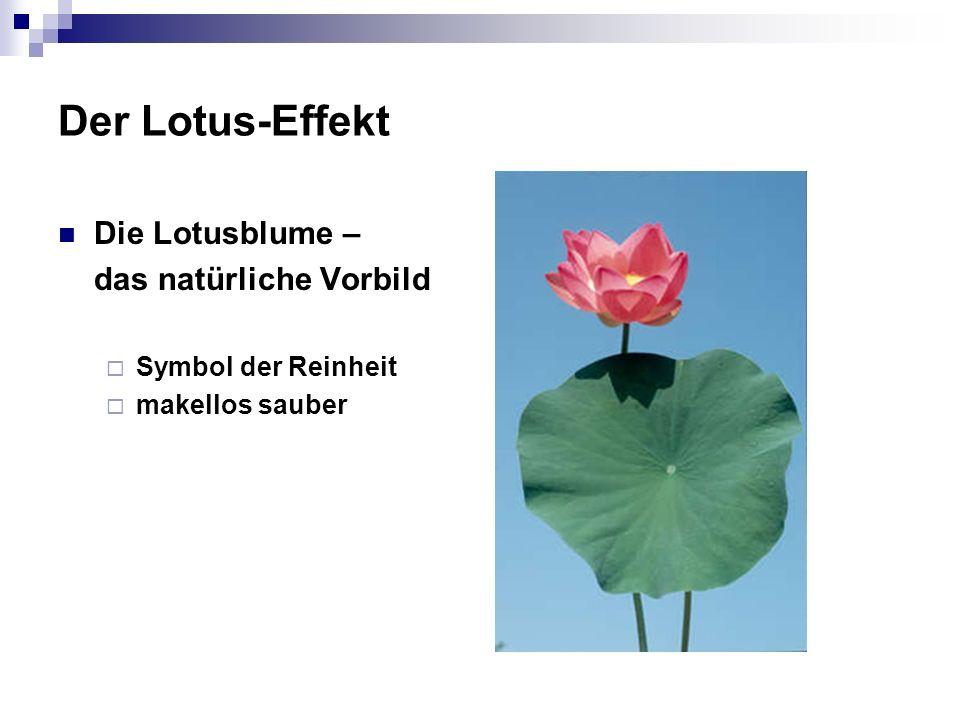 Der Lotus-Effekt Die Lotusblume – das natürliche Vorbild Symbol der Reinheit makellos sauber