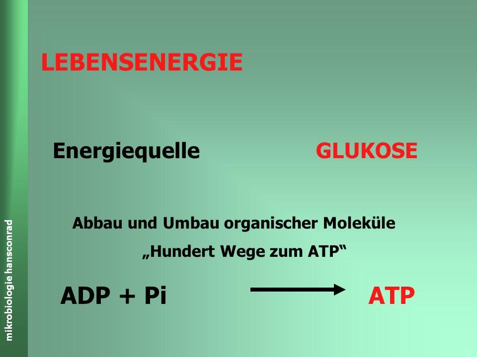 mikrobiologie hansconrad ADP + Pi ATP Abbau und Umbau organischer Moleküle Hundert Wege zum ATP Energiequelle GLUKOSE LEBENSENERGIE