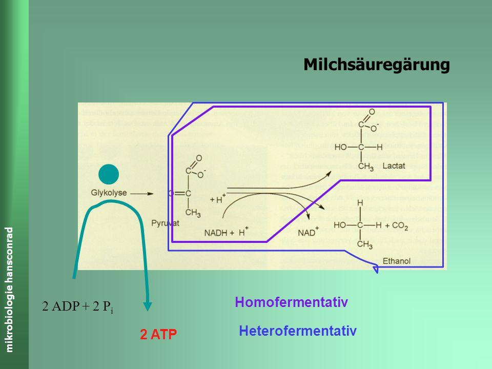 mikrobiologie hansconrad Milchsäuregärung 2 ATP 2 ADP + 2 P i Prozess abschliessen 1 Schritt 2 Schritte
