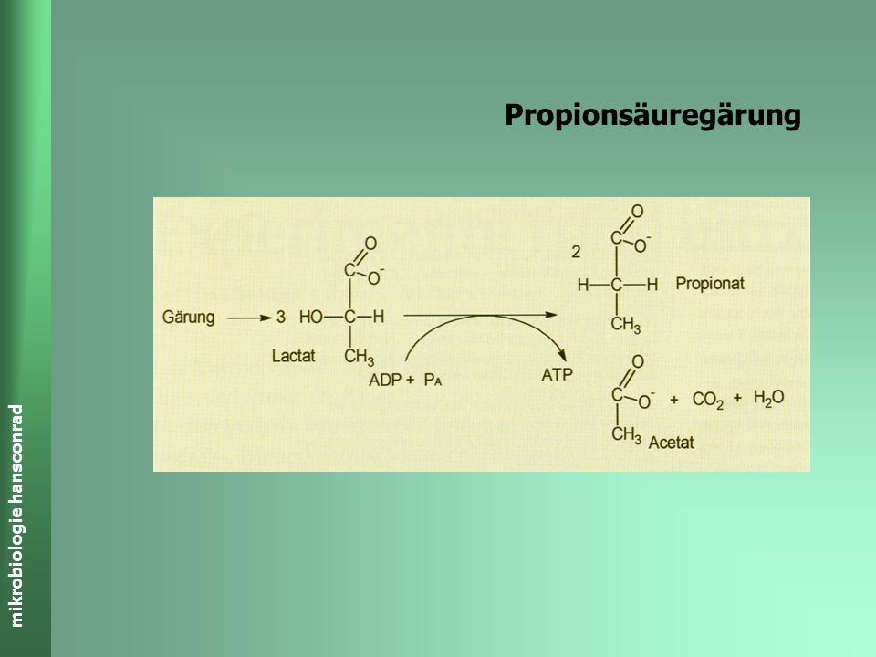 mikrobiologie hansconrad Propionssäure-Gärung 3C 3 H 6 O 3 Milchsäure 2 CH 3 -CH 2 -COOH + CH 3 COOH + CO 2 + H 2 O 2C 3 H 5 O 2 - + 2H + C 2 H 4 O 2