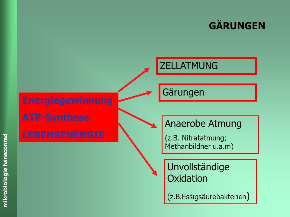 mikrobiologie hansconrad GÄRUNGEN Energiegewinnung ATP-Synthese LEBENSENERGIE ZELLATMUNG Gärungen Anaerobe Atmung (z.B.