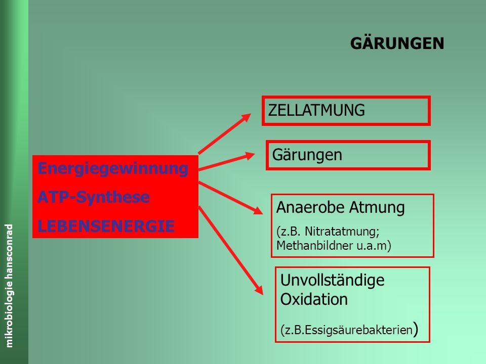 mikrobiologie hansconrad Buttersäure-Gärung C 6 H 12 O 6 CH 3 -CH 2 -CH 2 -COOH + 2 H 2 + 2 CO 2 C 4 H 8 O 2 - + H + ADP + P i 2+1 ATP Wärme + GLYCOLYSE 2 H 2 + 2 CO 2