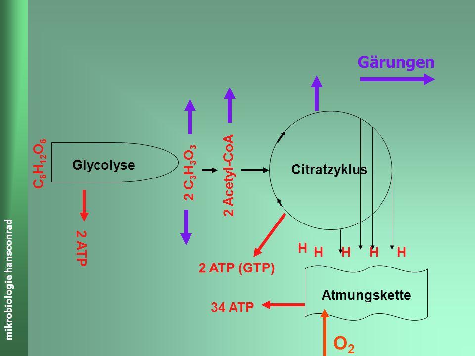 mikrobiologie hansconrad Gärungen C 6 H 12 O 6 2 C 3 H 3 O 3 2 Acetyl-CoA Atmungskette Citratzyklus Glycolyse 2 ATP HHH H H 34 ATP 2 ATP (GTP) O2O2