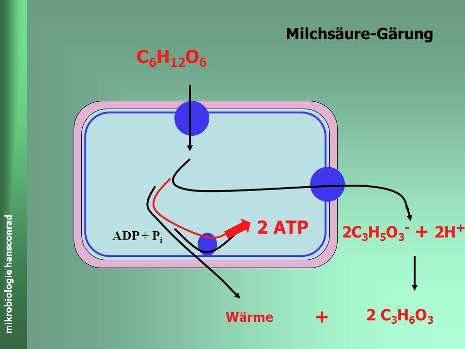 mikrobiologie hansconrad Ethanolische-Gärung C 6 H 12 O 6 2C 2 H 5 OH + 2CO 2 ADP + P i 2 ATP Wärme + GLYCOLYSE