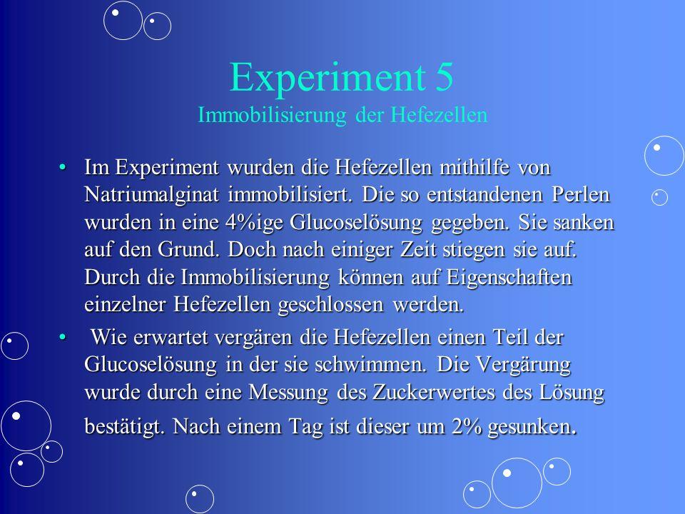 Experiment 5 Immobilisierung der Hefezellen Im Experiment wurden die Hefezellen mithilfe von Natriumalginat immobilisiert. Die so entstandenen Perlen