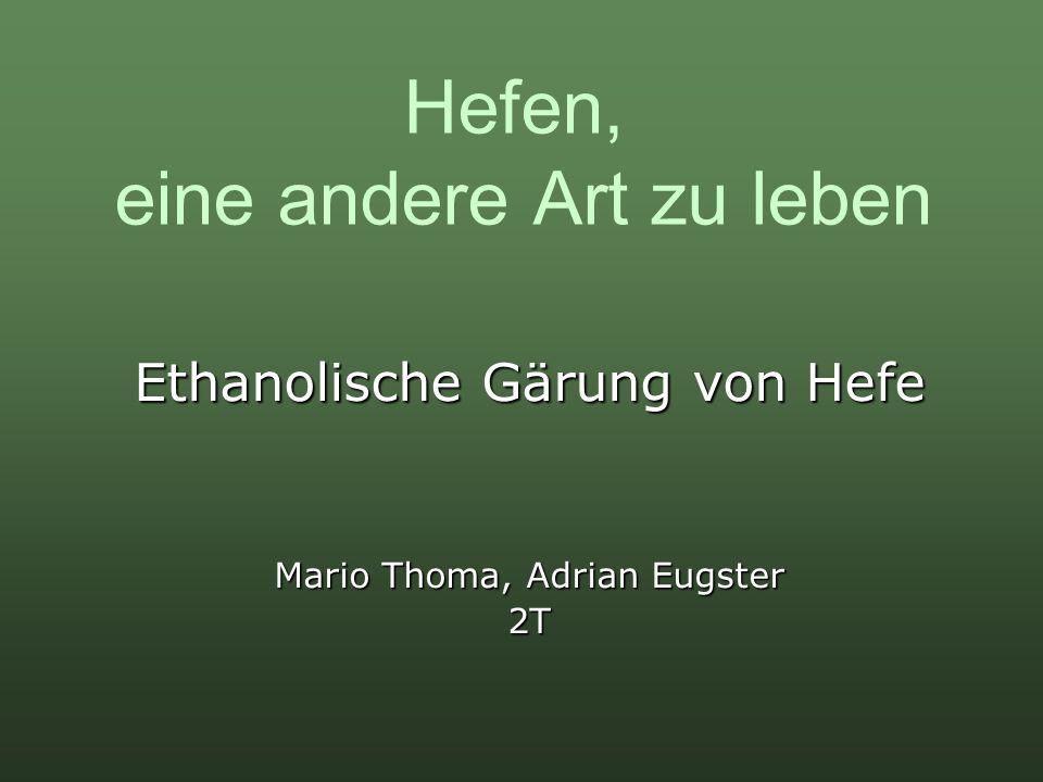 Hefen, eine andere Art zu leben Ethanolische Gärung von Hefe Mario Thoma, Adrian Eugster 2T