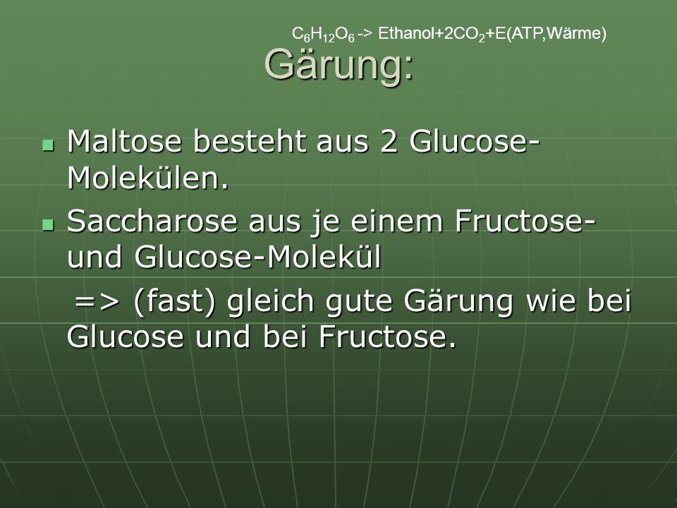C 6 H 12 O 6 -> Ethanol+2CO 2 +E(ATP,Wärme) Gärung: Maltose besteht aus 2 Glucose- Molekülen. Maltose besteht aus 2 Glucose- Molekülen. Saccharose aus