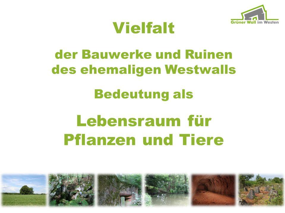 Vielfalt der Bauwerke und Ruinen des ehemaligen Westwalls Bedeutung als Lebensraum für Pflanzen und Tiere