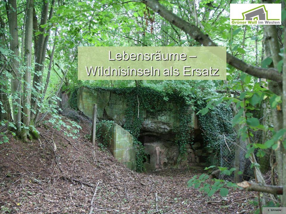 Lebensräume – Wildnisinseln als Ersatz S. Schneider