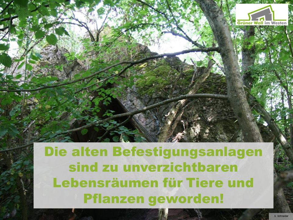 Die alten Befestigungsanlagen sind zu unverzichtbaren Lebensräumen für Tiere und Pflanzen geworden! S. Schneider