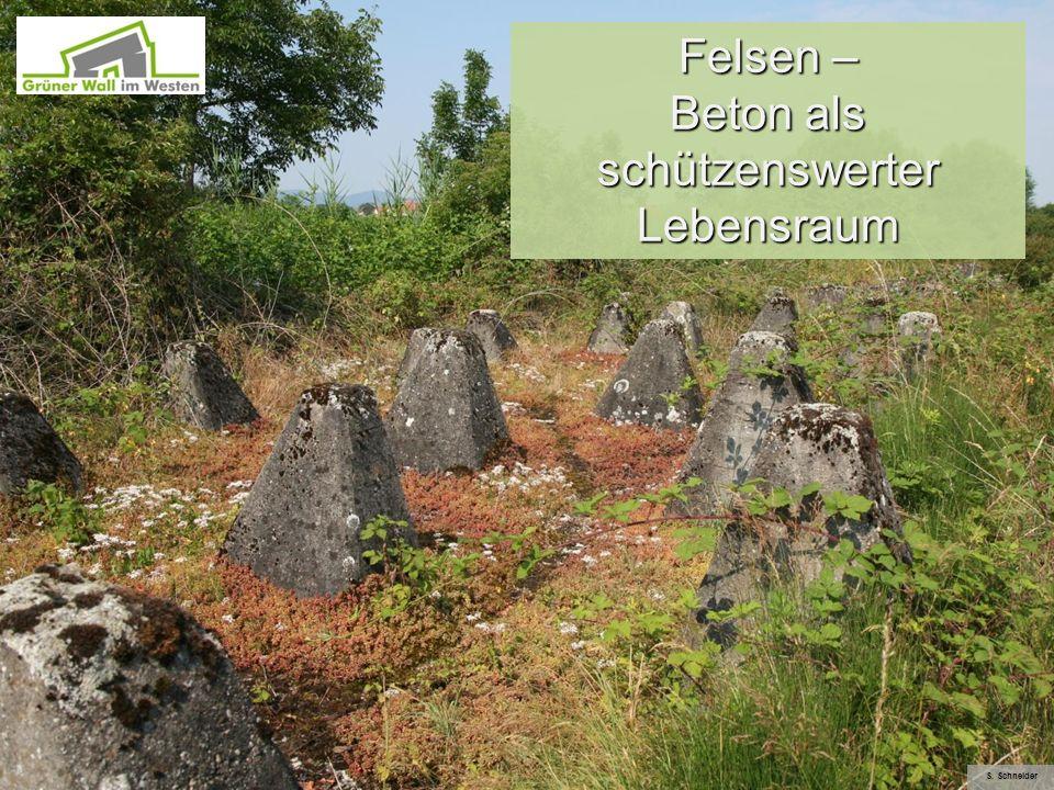 Felsen – Beton als schützenswerter Lebensraum S. Schneider