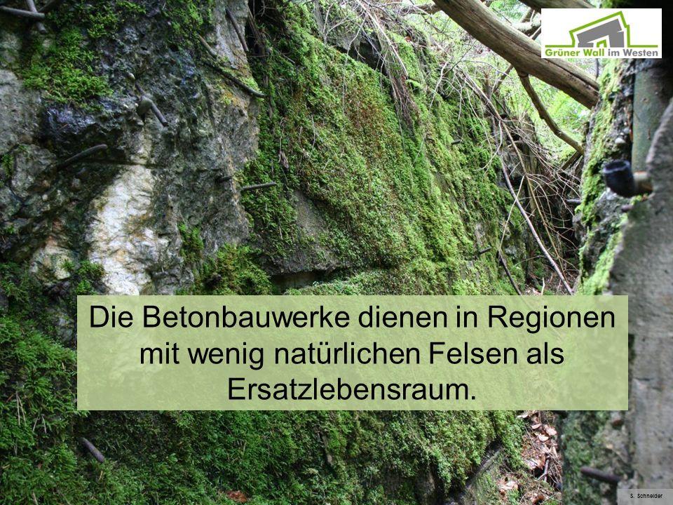 Die Betonbauwerke dienen in Regionen mit wenig natürlichen Felsen als Ersatzlebensraum. S. Schneider