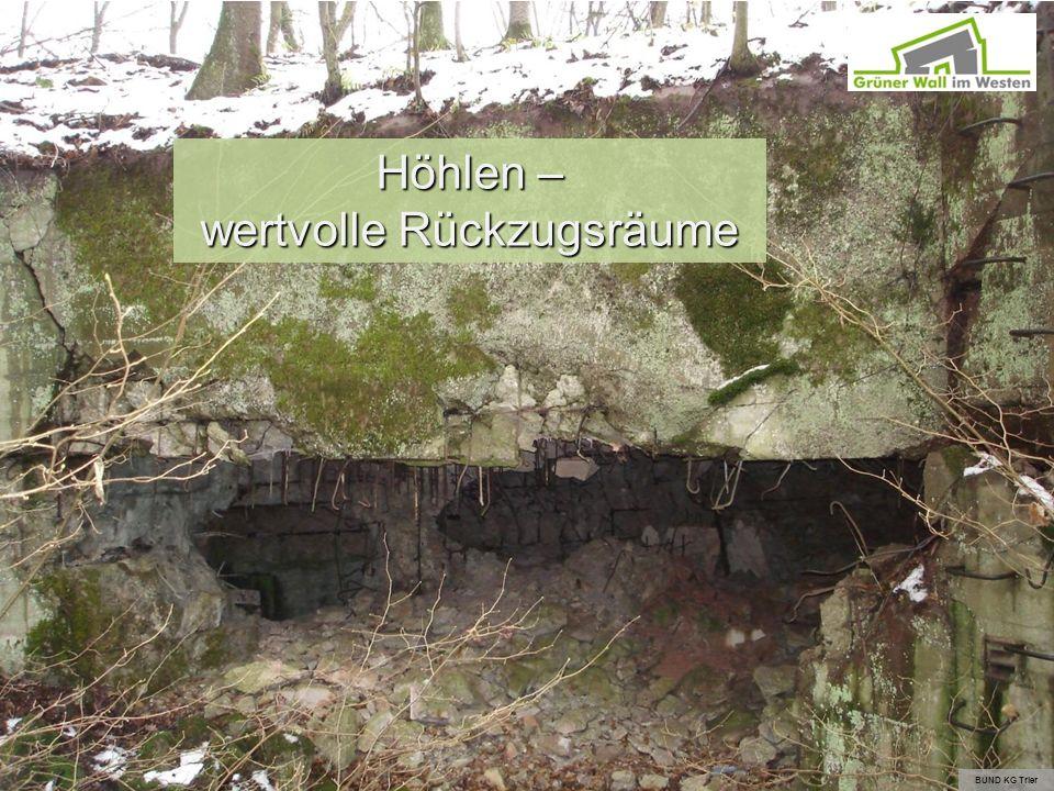 Höhlen – wertvolle Rückzugsräume BUND KG Trier