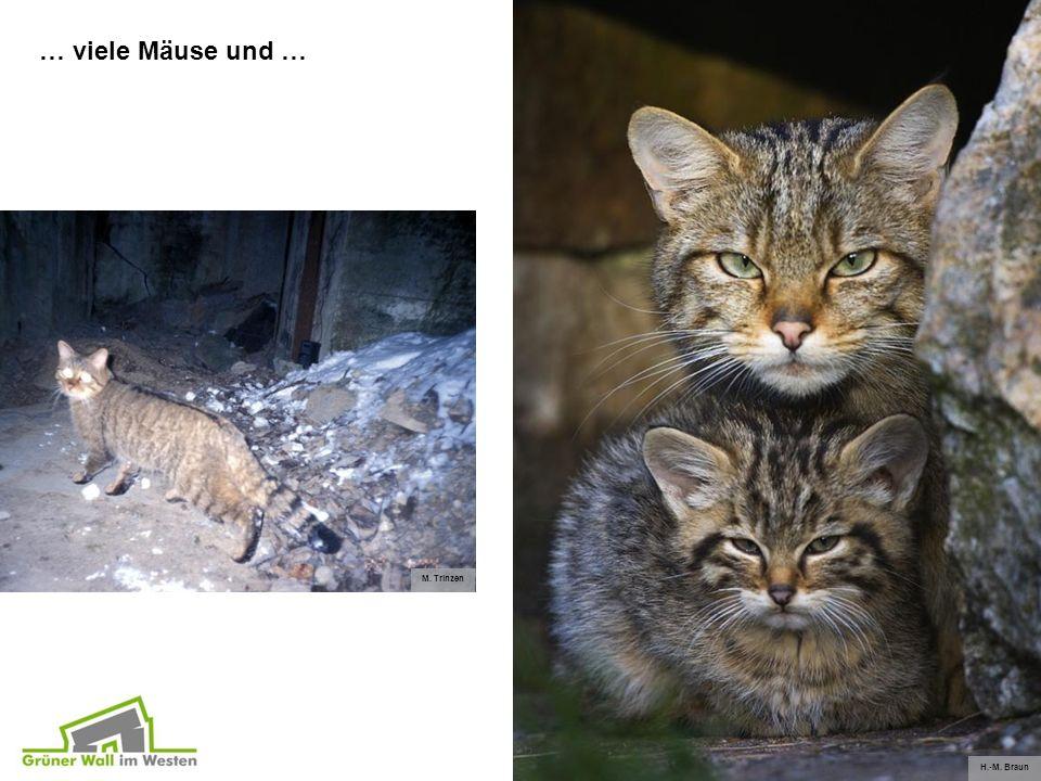 M. Trinzen H.-M. Braun … viele Mäuse und …