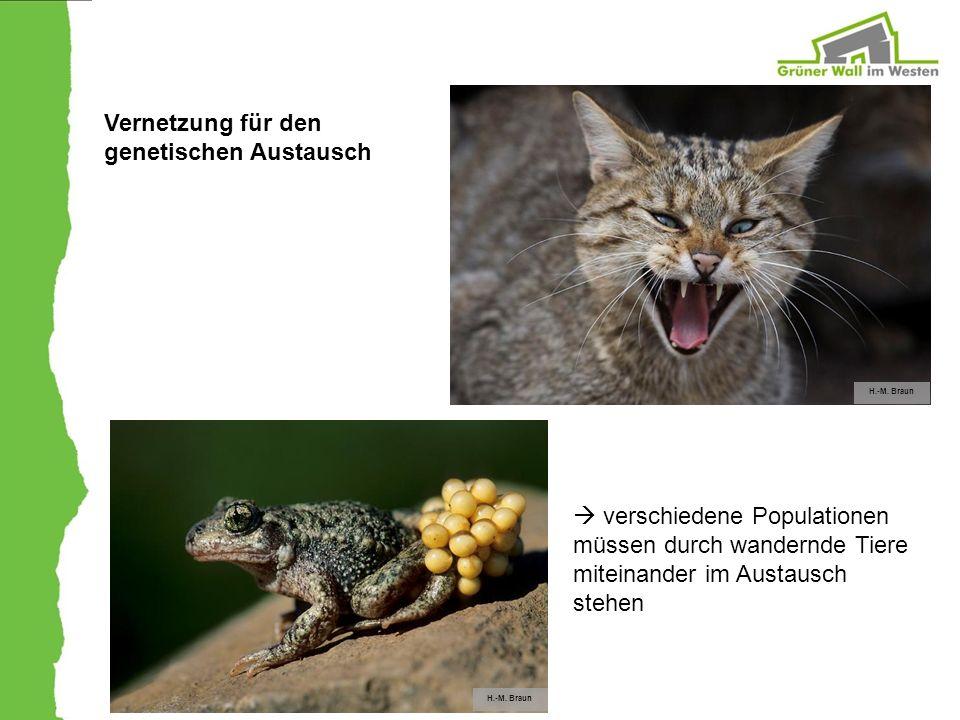 H.-M. Braun Vernetzung für den genetischen Austausch verschiedene Populationen müssen durch wandernde Tiere miteinander im Austausch stehen