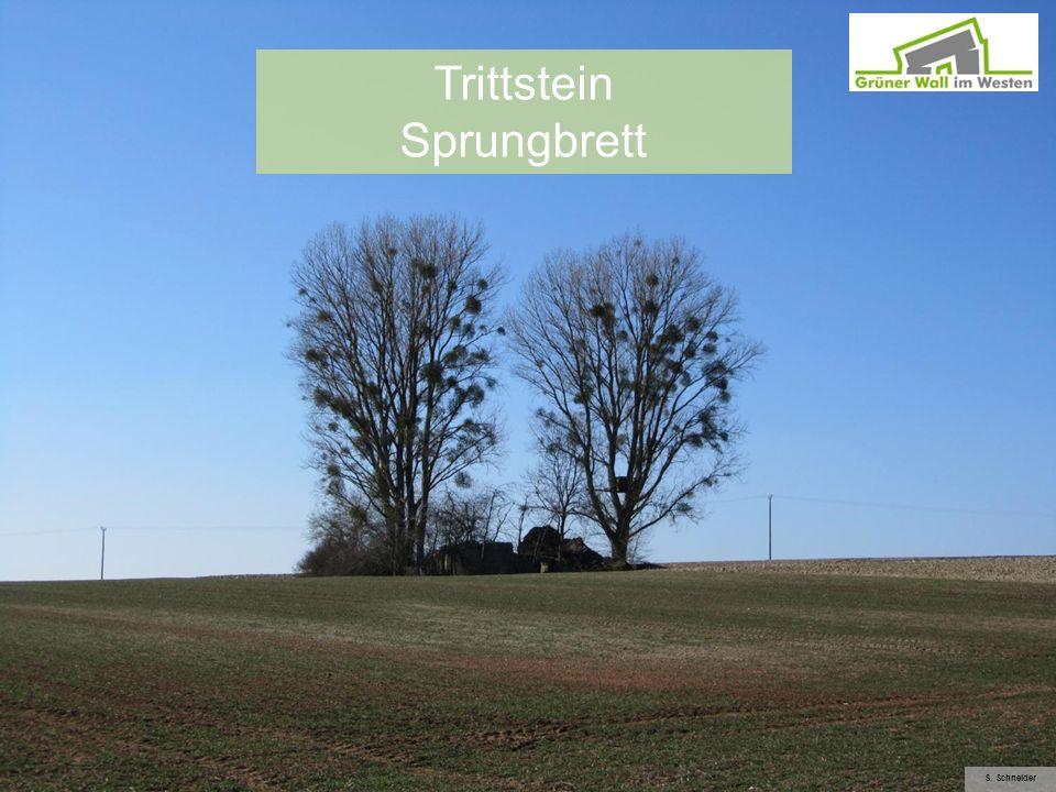 Trittstein Sprungbrett S. Schneider