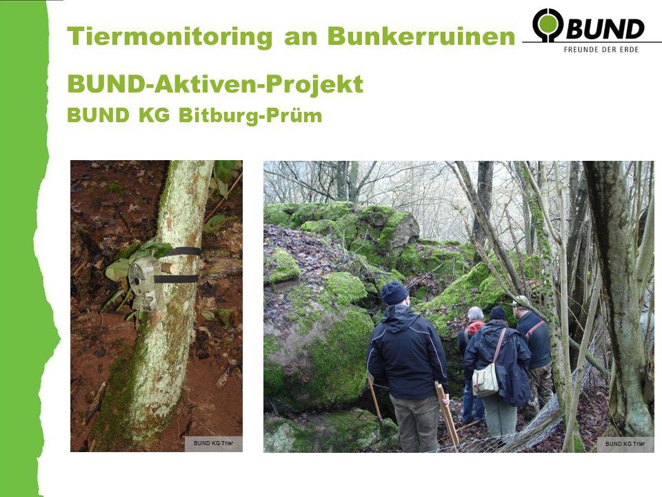 Tiermonitoring an Bunkerruinen BUND-Aktiven-Projekt BUND KG Bitburg-Prüm BUND KG Trier