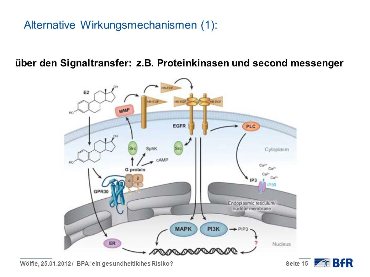 Wölfle, 25.01.2012 / BPA: ein gesundheitliches Risiko?Seite 15 Alternative Wirkungsmechanismen (1): über den Signaltransfer: z.B.