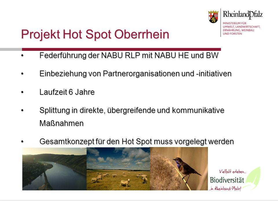 Projekt Hot Spot Oberrhein Federführung der NABU RLP mit NABU HE und BWFederführung der NABU RLP mit NABU HE und BW Einbeziehung von Partnerorganisati