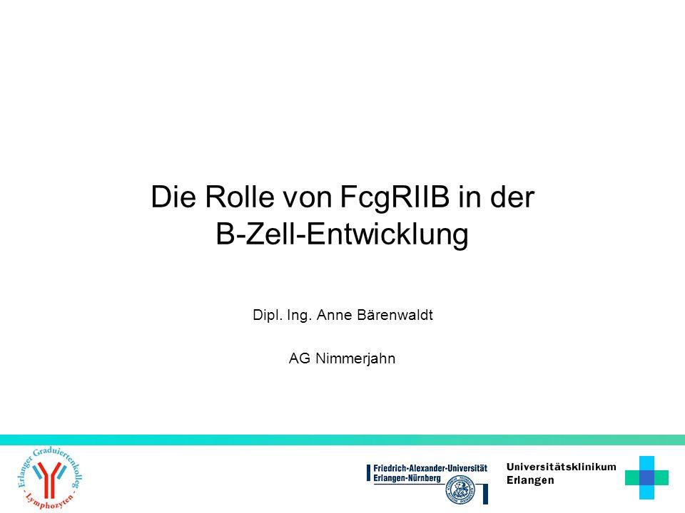 Dipl. Ing. Anne Bärenwaldt AG Nimmerjahn Die Rolle von FcgRIIB in der B-Zell-Entwicklung