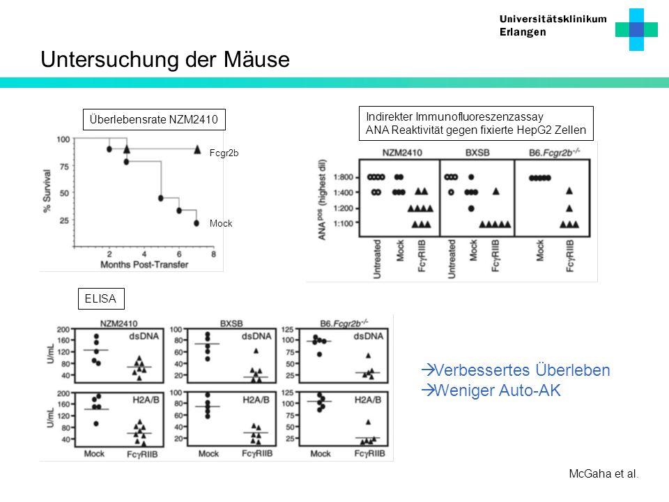Untersuchung der Mäuse McGaha et al. Mock Fcgr2b Indirekter Immunofluoreszenzassay ANA Reaktivität gegen fixierte HepG2 Zellen Überlebensrate NZM2410