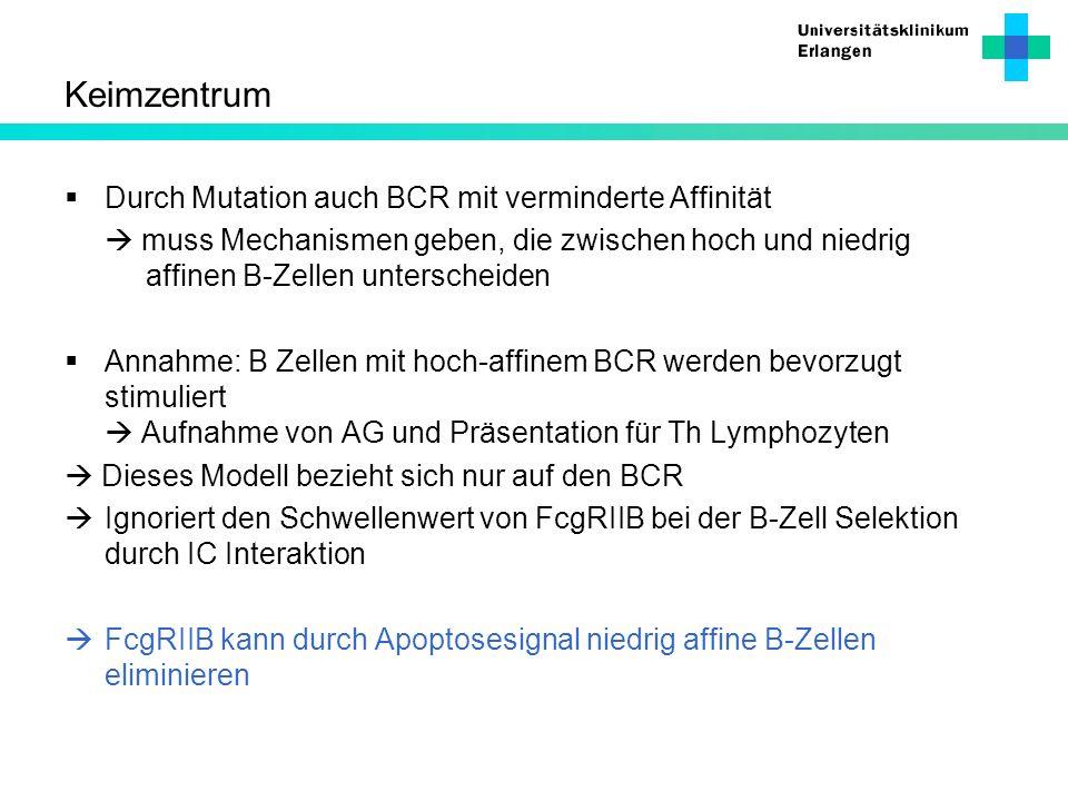 Keimzentrum Durch Mutation auch BCR mit verminderte Affinität muss Mechanismen geben, die zwischen hoch und niedrig affinen B-Zellen unterscheiden Ann