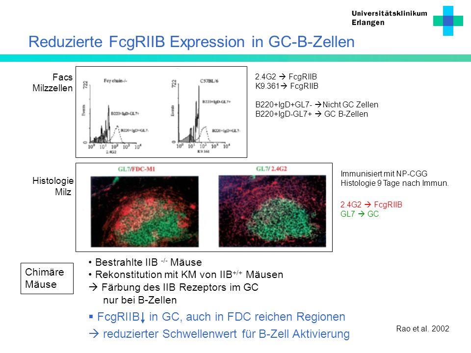 Reduzierte FcgRIIB Expression in GC-B-Zellen FcgRIIB in GC, auch in FDC reichen Regionen reduzierter Schwellenwert für B-Zell Aktivierung 2.4G2 FcgRII