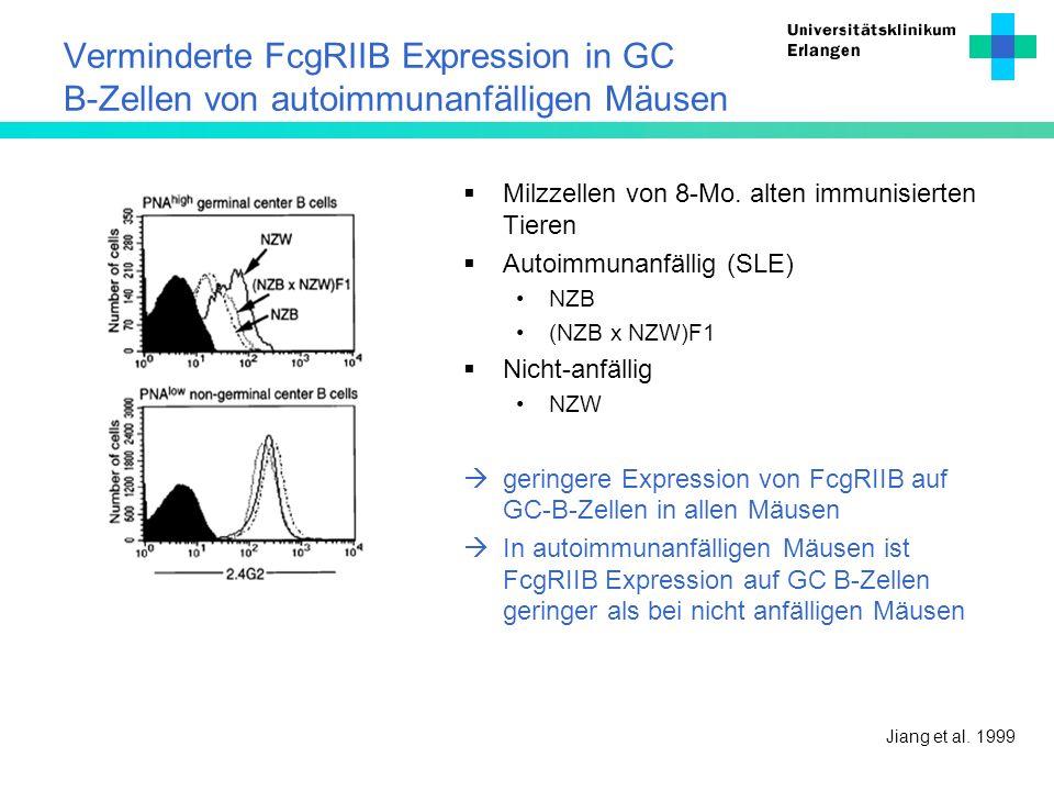 Verminderte FcgRIIB Expression in GC B-Zellen von autoimmunanfälligen Mäusen Jiang et al. 1999 Milzzellen von 8-Mo. alten immunisierten Tieren Autoimm
