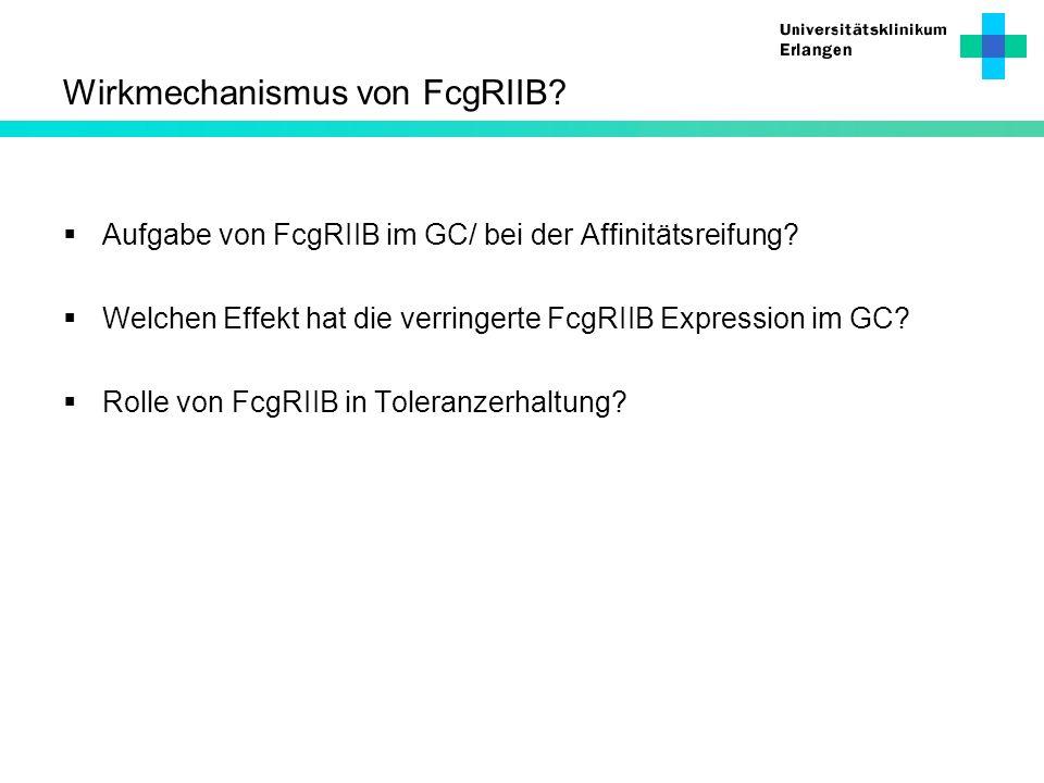Wirkmechanismus von FcgRIIB? Aufgabe von FcgRIIB im GC/ bei der Affinitätsreifung? Welchen Effekt hat die verringerte FcgRIIB Expression im GC? Rolle