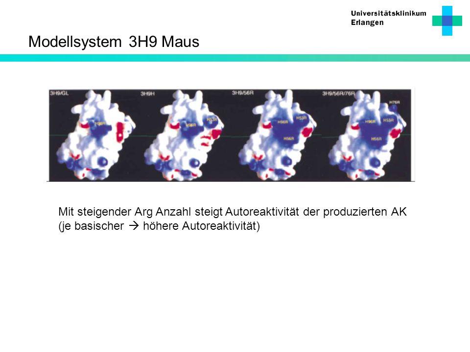 Modellsystem 3H9 Maus Mit steigender Arg Anzahl steigt Autoreaktivität der produzierten AK (je basischer höhere Autoreaktivität)