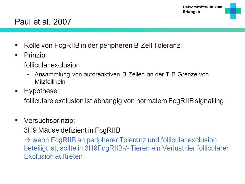 Paul et al. 2007 Rolle von FcgRIIB in der peripheren B-Zell Toleranz Prinzip: follicular exclusion Ansammlung von autoreaktiven B-Zellen an der T-B Gr