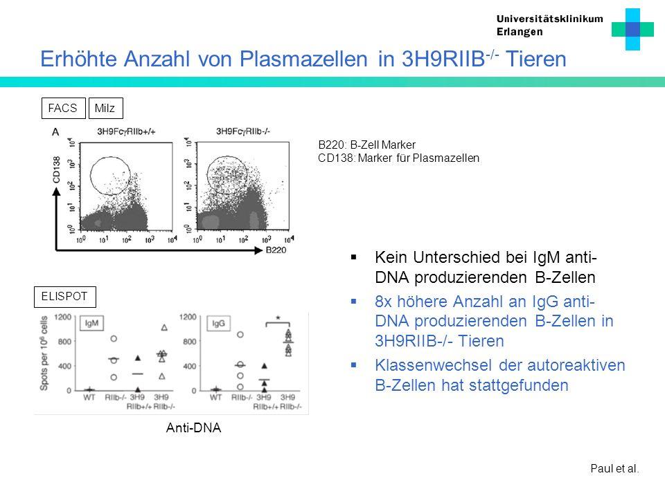 Erhöhte Anzahl von Plasmazellen in 3H9RIIB -/- Tieren Kein Unterschied bei IgM anti- DNA produzierenden B-Zellen 8x höhere Anzahl an IgG anti- DNA pro