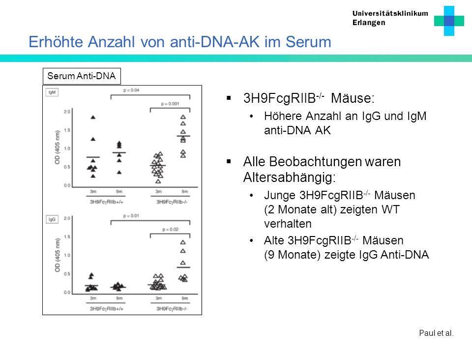 Erhöhte Anzahl von anti-DNA-AK im Serum 3H9FcgRIIB -/- Mäuse: Höhere Anzahl an IgG und IgM anti-DNA AK Paul et al. Alle Beobachtungen waren Altersabhä
