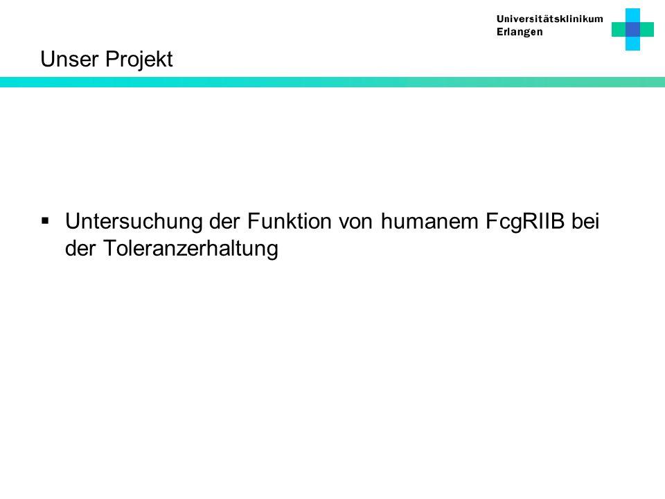 Unser Projekt Untersuchung der Funktion von humanem FcgRIIB bei der Toleranzerhaltung