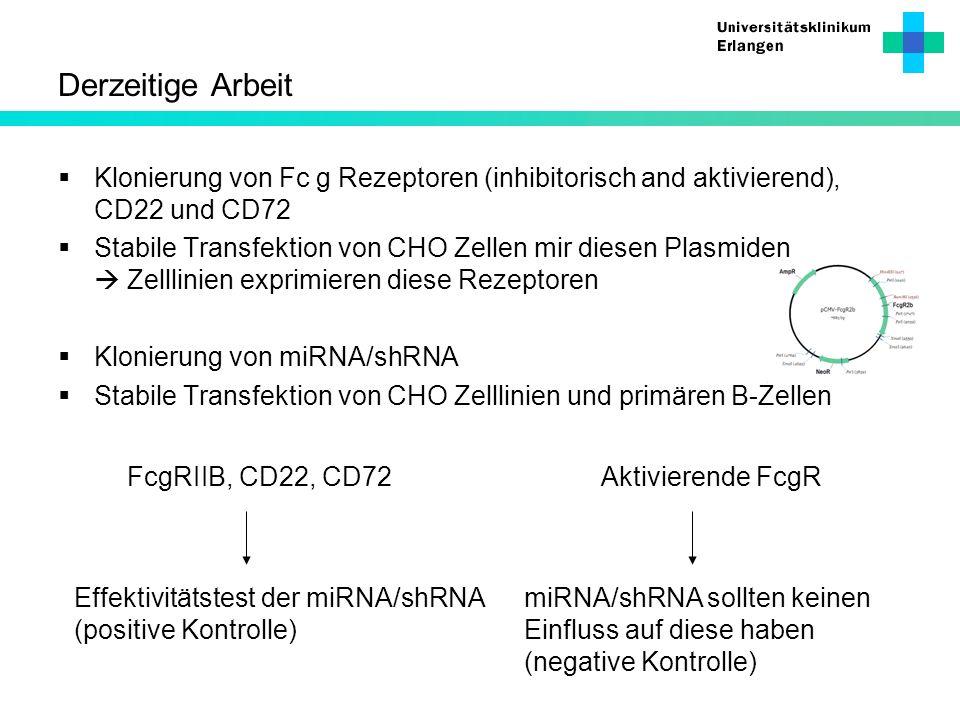 Derzeitige Arbeit Klonierung von Fc g Rezeptoren (inhibitorisch and aktivierend), CD22 und CD72 Stabile Transfektion von CHO Zellen mir diesen Plasmid