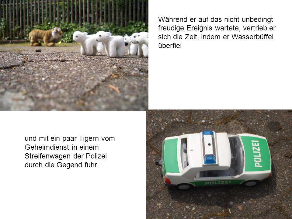 Während er auf das nicht unbedingt freudige Ereignis wartete, vertrieb er sich die Zeit, indem er Wasserbüffel überfiel und mit ein paar Tigern vom Geheimdienst in einem Streifenwagen der Polizei durch die Gegend fuhr.