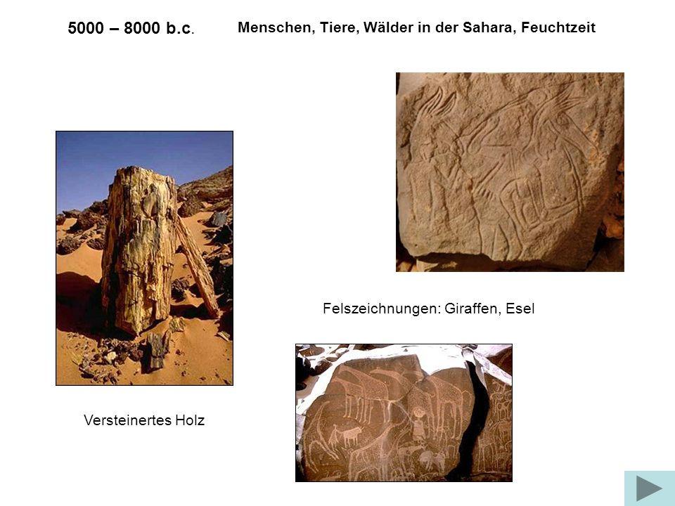 5000 – 8000 b.c. Versteinertes Holz Menschen, Tiere, Wälder in der Sahara, Feuchtzeit Felszeichnungen: Giraffen, Esel
