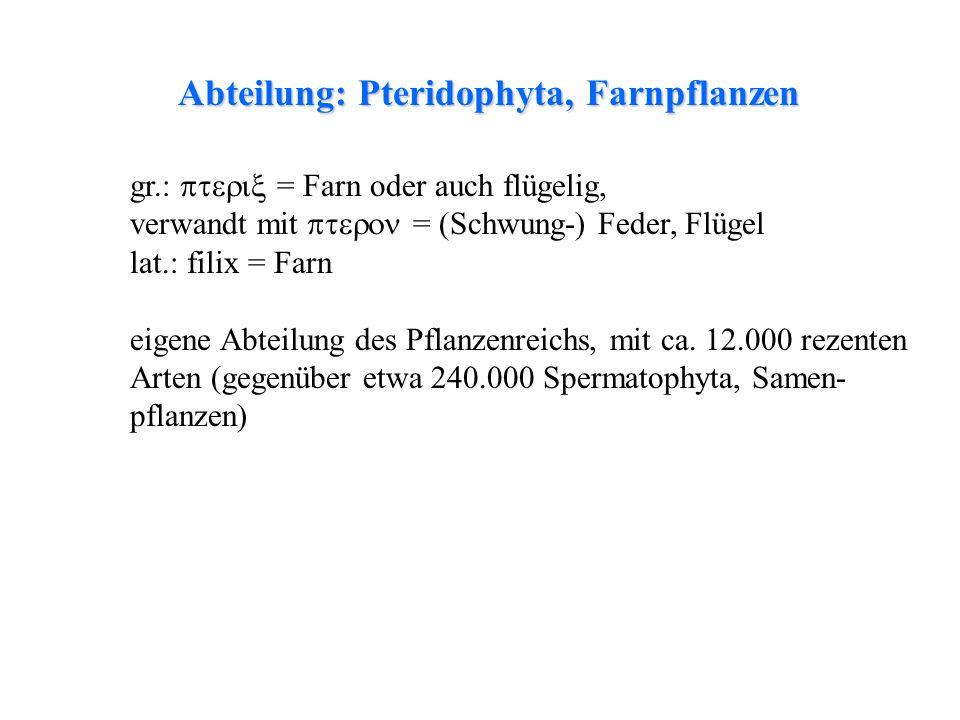 Abteilung: Pteridophyta, Farnpflanzen thalloses Lebermoosfolioses LebermoosLaubmoosfolioses Lebermoos gr.: = Farn oder auch flügelig, verwandt mit = (