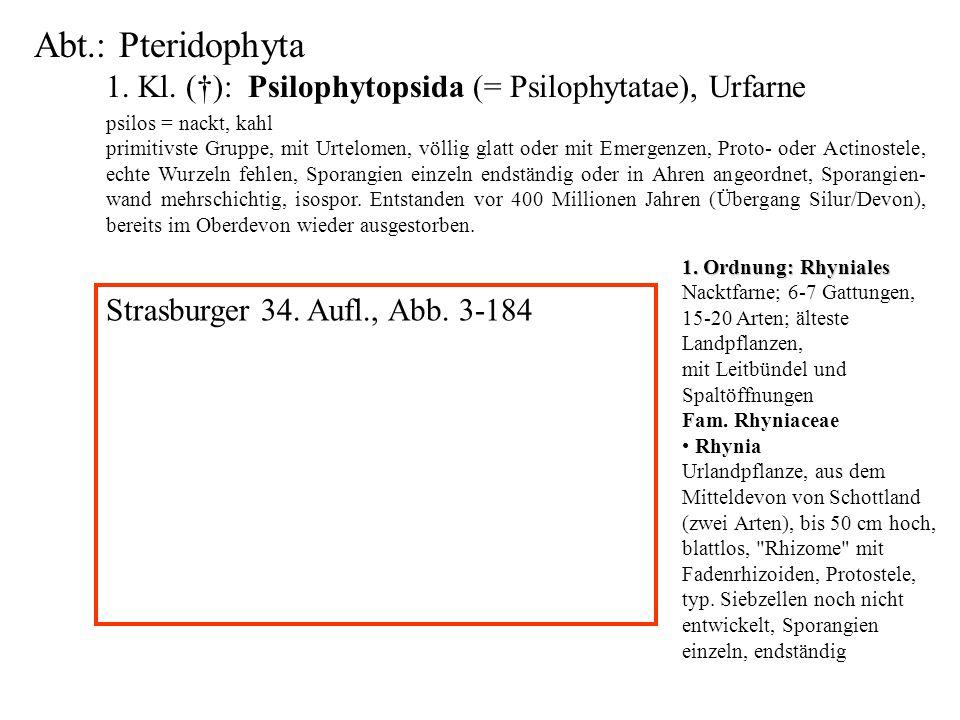 Abt.: Pteridophyta 1. Kl. (): Psilophytopsida (= Psilophytatae), Urfarne folioses Lebermoos psilos = nackt, kahl primitivste Gruppe, mit Urtelomen, vö