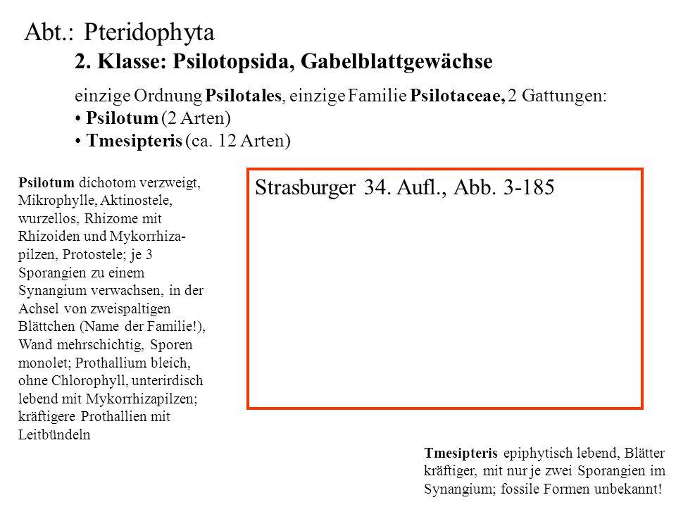 Abt.: Pteridophyta 2. Klasse: Psilotopsida, Gabelblattgewächse folioses Lebermoos einzige Ordnung Psilotales, einzige Familie Psilotaceae, 2 Gattungen