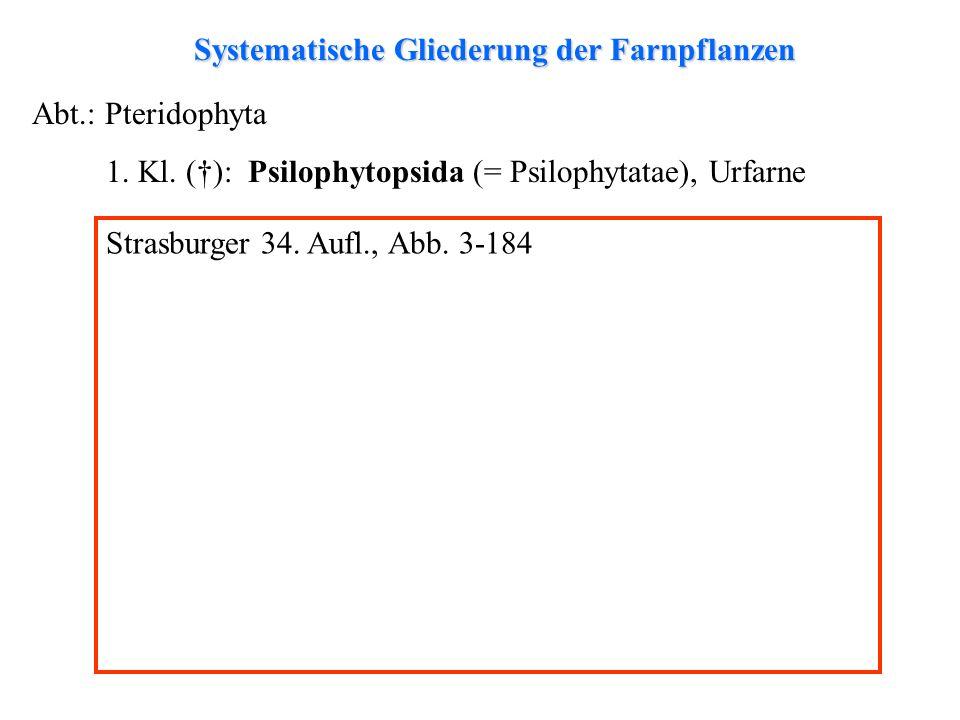 Systematische Gliederung der Farnpflanzen Abt.: Pteridophyta 1.