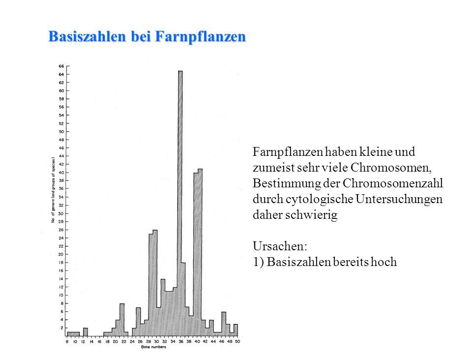 folioses Lebermoos Basiszahl x n = Chromosomenzahl des Gametophyten 2n = Chromosomenzahl des Sporophyten Ploidiestufen bei Farnpflanzen Ursachen: 1) Basiszahlen bereits hoch 2) Polyploidie ist häufig Ausmaß der Polyploidie: bei vorsichtiger Schätzung 50-60% der Farnpfl.