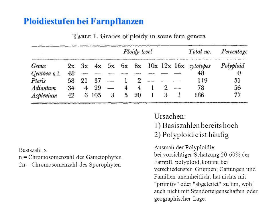 folioses Lebermoos Basiszahl x n = Chromosomenzahl des Gametophyten 2n = Chromosomenzahl des Sporophyten Ploidiestufen bei Farnpflanzen Ursachen: 1) B